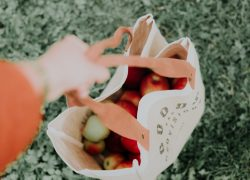 The Best Eco-Friendly Alternative to Single-Use Plastic Bags